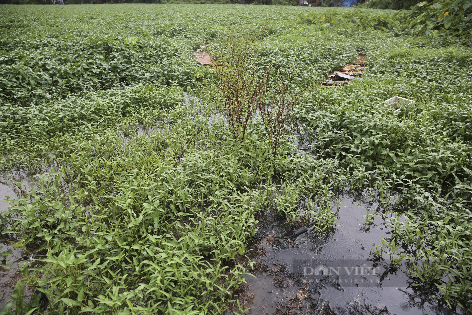 """""""Giậm chân tại chỗ"""" 7 năm, một hồ nước giữa trung tâm Hà Nội bị xâm lấn, ô nhiễm nặng - Ảnh 5."""