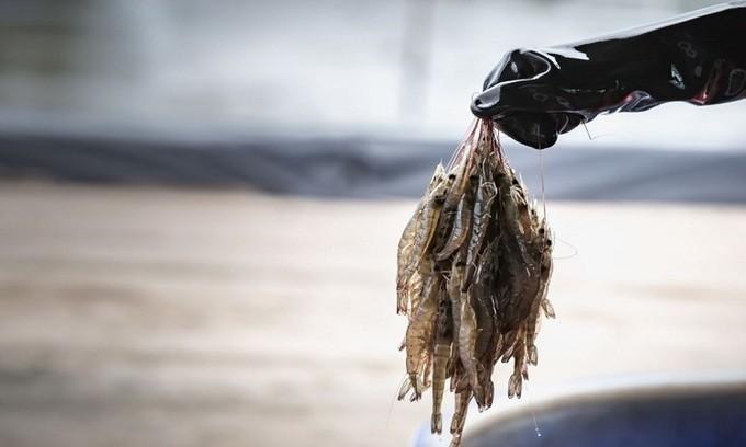 Nữ hoàng cá tra Vĩnh Hoàn rót vốn vào startup sản xuất thịt tôm nhân tạo tại Singapore - Ảnh 2.