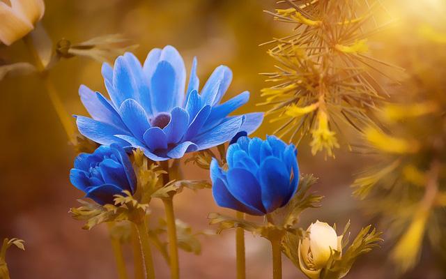 Người sinh vào khung giờ Âm lịch này chỉ cần nỗ lực, cả đời hưởng phúc, vạn sự hanh thông