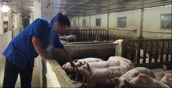 Chàng thanh niên người Tày vươn lên từ trang trại lợn công nghệ cao - Ảnh 2.