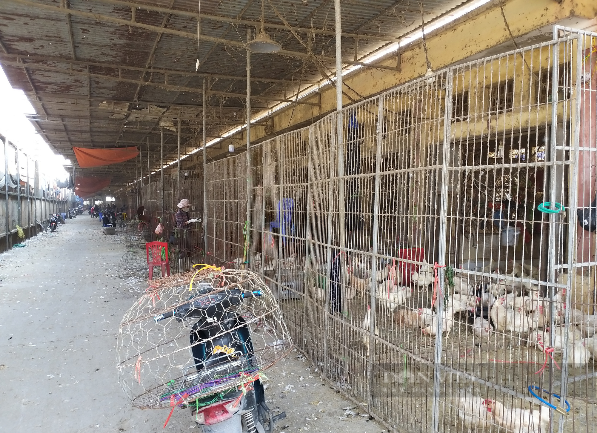 Giá gia cầm hôm nay 24/7: Cập nhật giá gà, vịt tại chợ đầu mối gia cầm lớn nhất miền Bắc  - Ảnh 1.