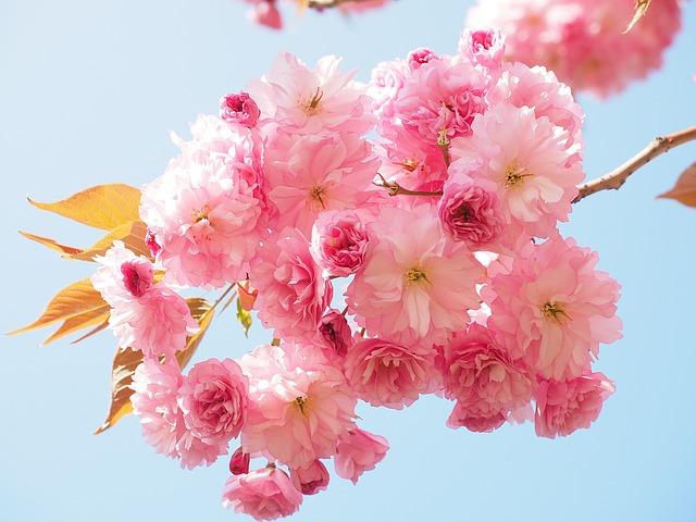 Người sinh vào khung giờ Âm lịch này chỉ cần nỗ lực, cả đời hưởng phúc, vạn sự hanh thông - Ảnh 1.