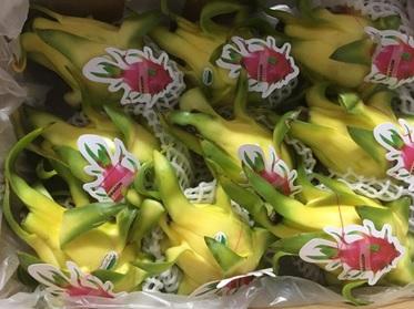 Loại trái cây trồng nhiều ở Bình Thuận, Long An có gì đặc biệt mà bán sang Úc giá tới 80.000 đồng/quả? - Ảnh 2.