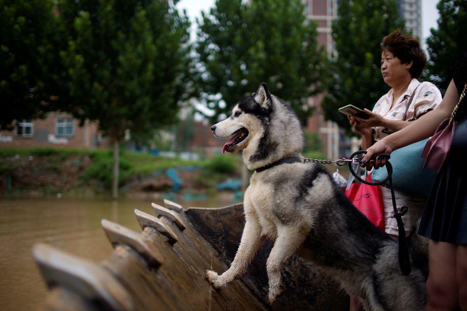 Máy xúc được sử dụng để giải cứu những người mắc kẹt trong lũ lụt ở Trung Quốc - Ảnh 3.
