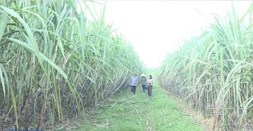 Mía đường Lam Sơn (LSS) muốn bán hơn 2.3 triệu cổ phiếu quỹ  - Ảnh 1.