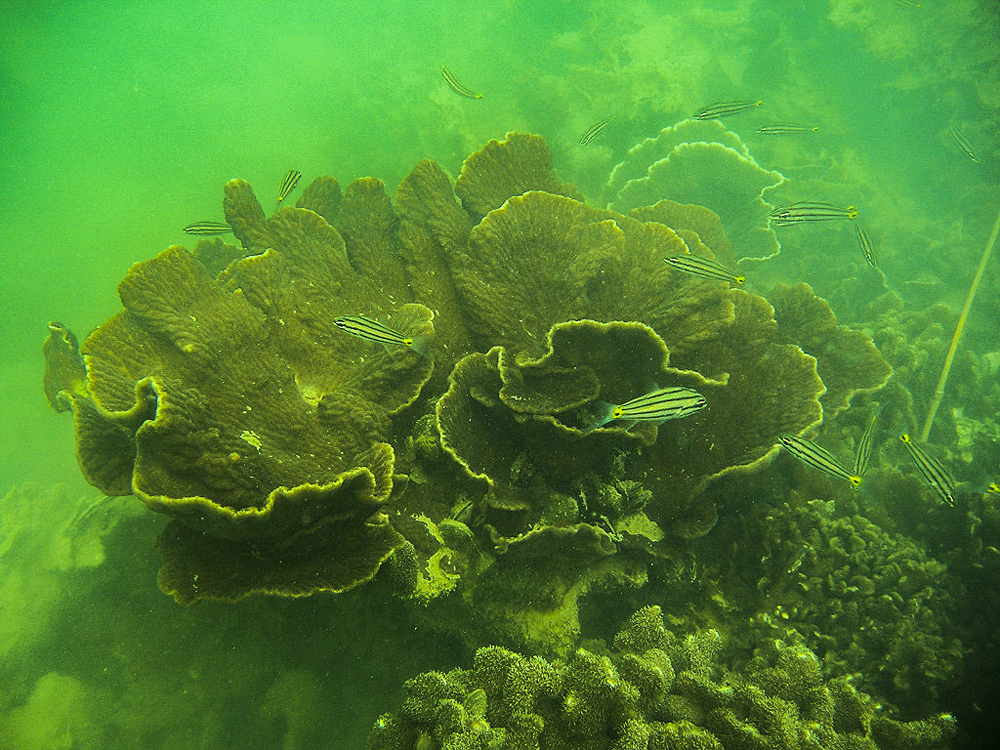 """Quảng Ninh: Chiêm ngưỡng những """"con"""" san hô đủ màu sắc đang hồi sinh mạnh mẽ ở vịnh Hạ Long - Ảnh 6."""
