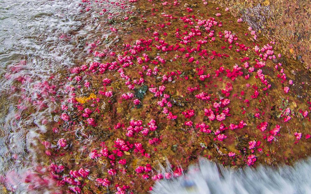 """Quảng Ninh: Chiêm ngưỡng những """"con"""" san hô đủ màu sắc đang hồi sinh mạnh mẽ ở vịnh Hạ Long - Ảnh 8."""