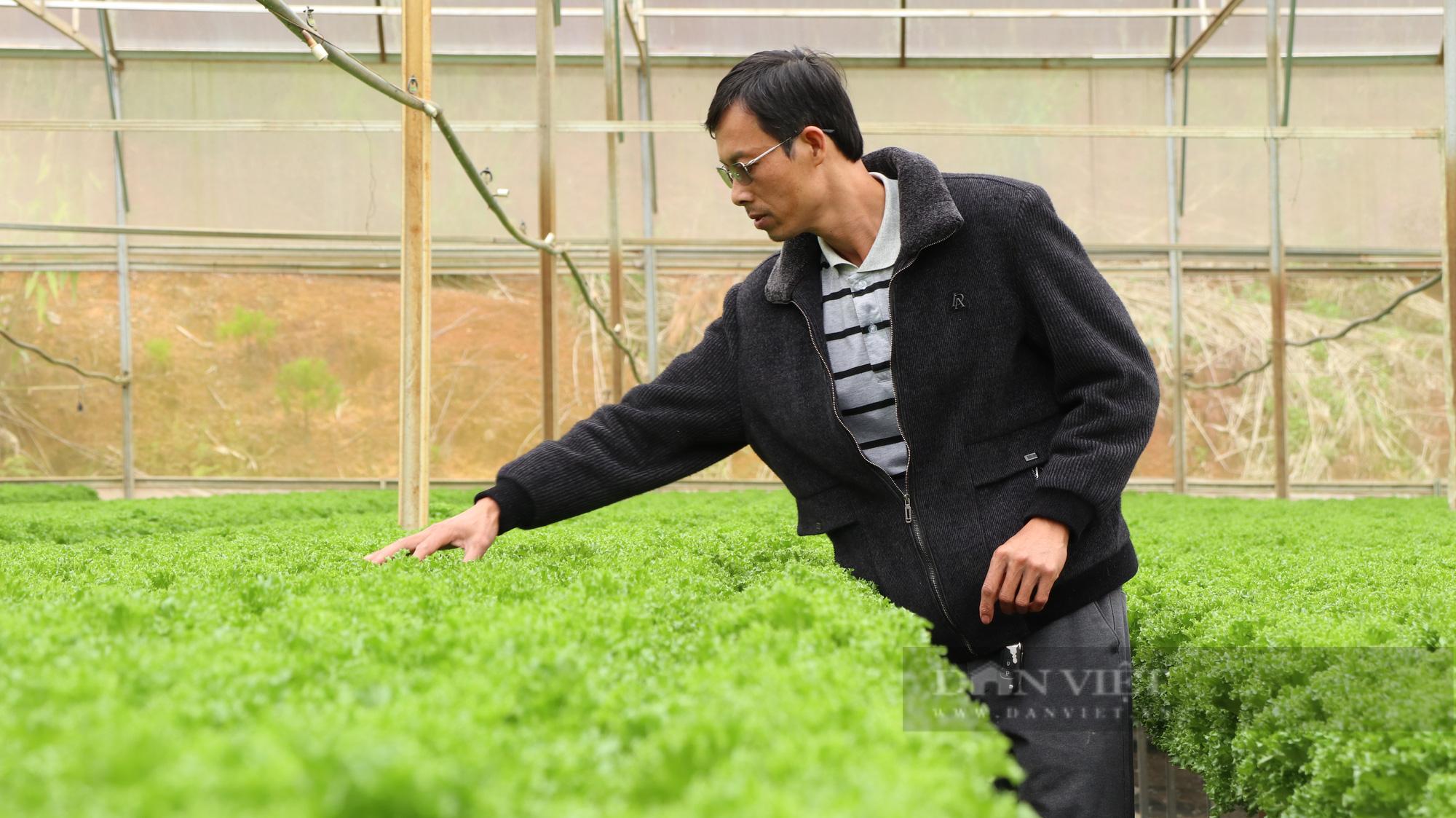 """""""Dũng cao"""" làm nông nghiệp công nghệ cao, xuất khẩu hàng trăm tấn rau xà lách đi Hàn Quốc - Ảnh 3."""