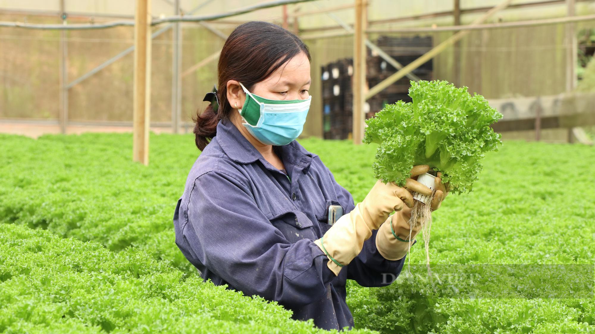 """""""Dũng cao"""" làm nông nghiệp công nghệ cao, xuất khẩu hàng trăm tấn rau xà lách đi Hàn Quốc - Ảnh 4."""