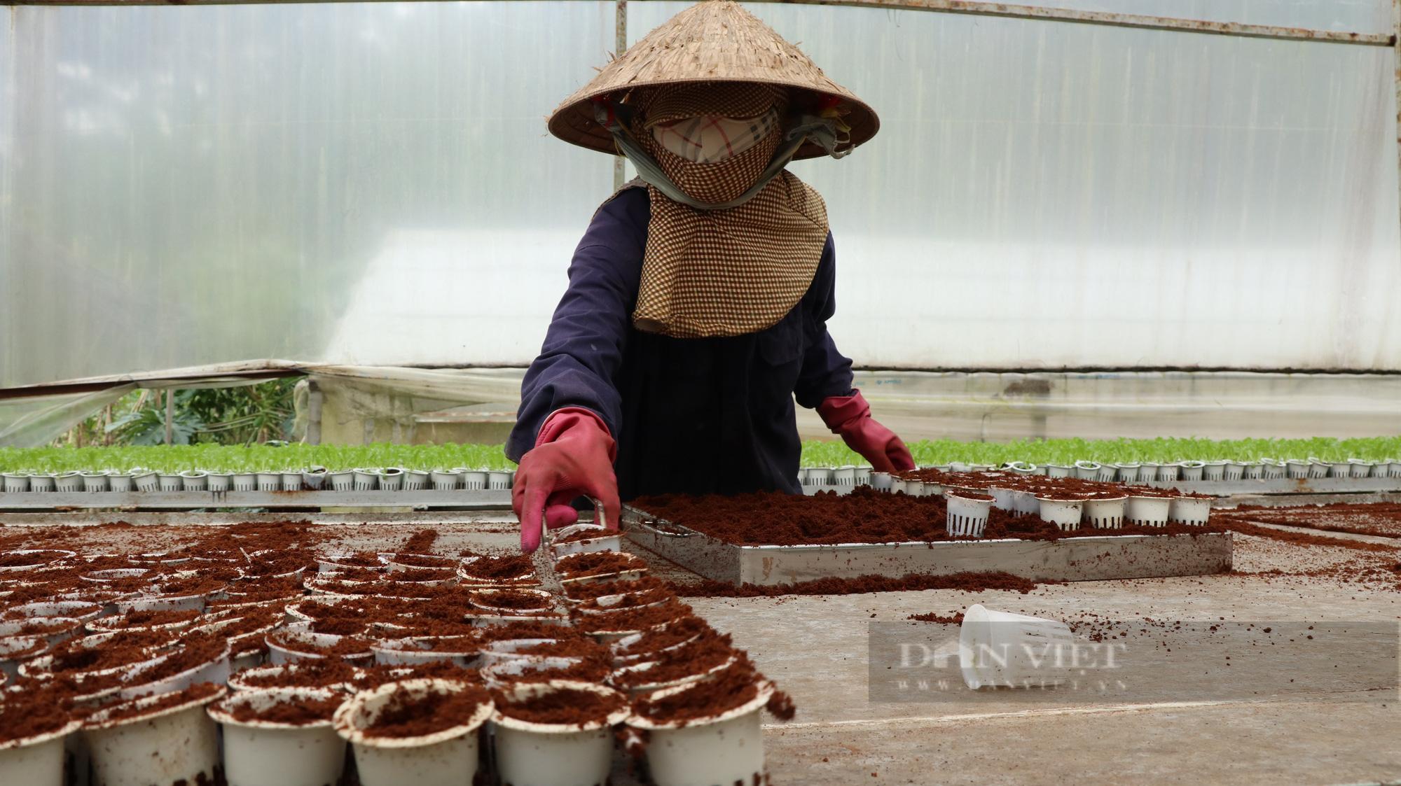 """""""Dũng cao"""" làm nông nghiệp công nghệ cao, xuất khẩu hàng trăm tấn rau xà lách đi Hàn Quốc - Ảnh 6."""