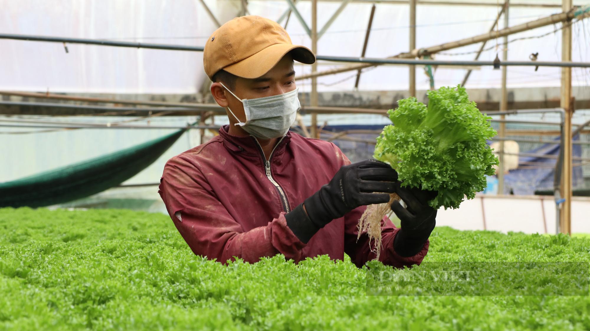"""""""Dũng cao"""" làm nông nghiệp công nghệ cao, xuất khẩu hàng trăm tấn rau xà lách đi Hàn Quốc - Ảnh 8."""