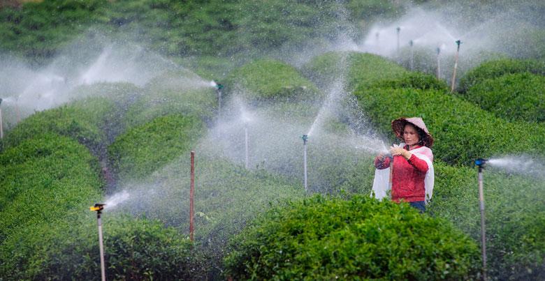 Lắp camera theo dõi rau, gắn chip lên bò sữa - ngành nông nghiệp Lâm Đồng đang bứt tốc (bài 2) - Ảnh 2.