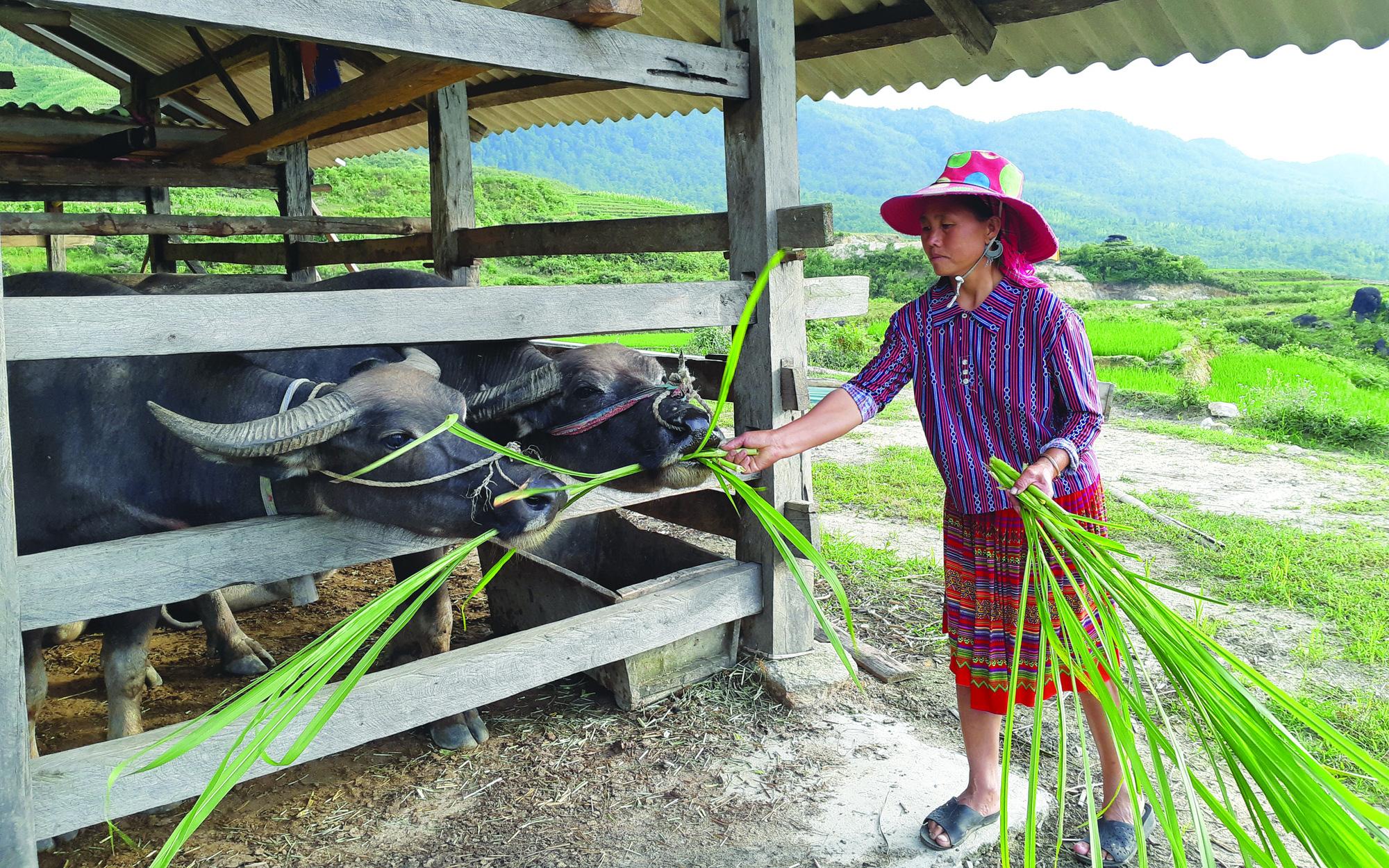 Sức sống trên bản người Mông ở Nàng Cút