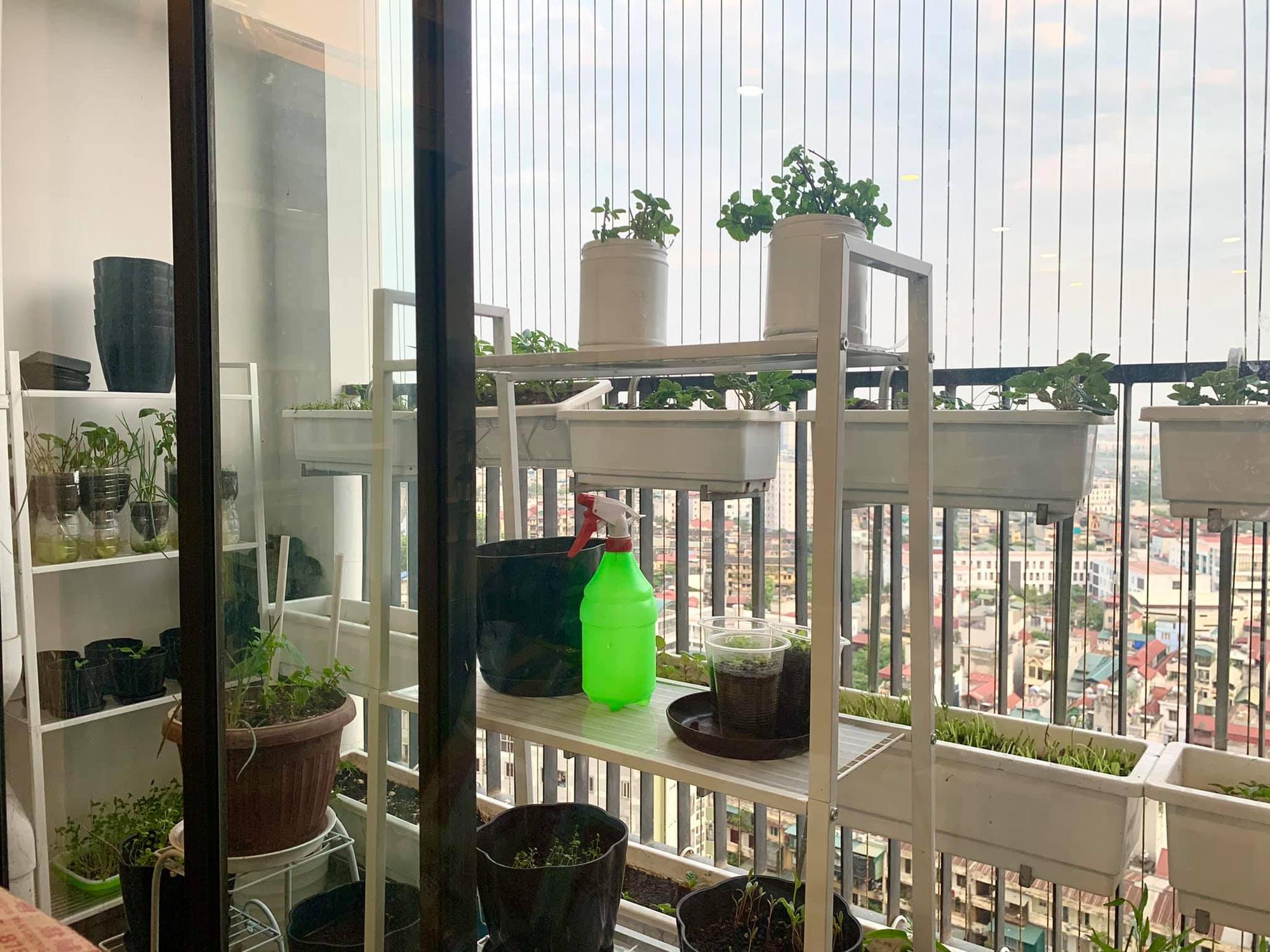 Ban công 7m2 vẫn đủ rau ăn cho cả nhà trong mùa dịch giãn cách ở Hà Nội - Ảnh 7.