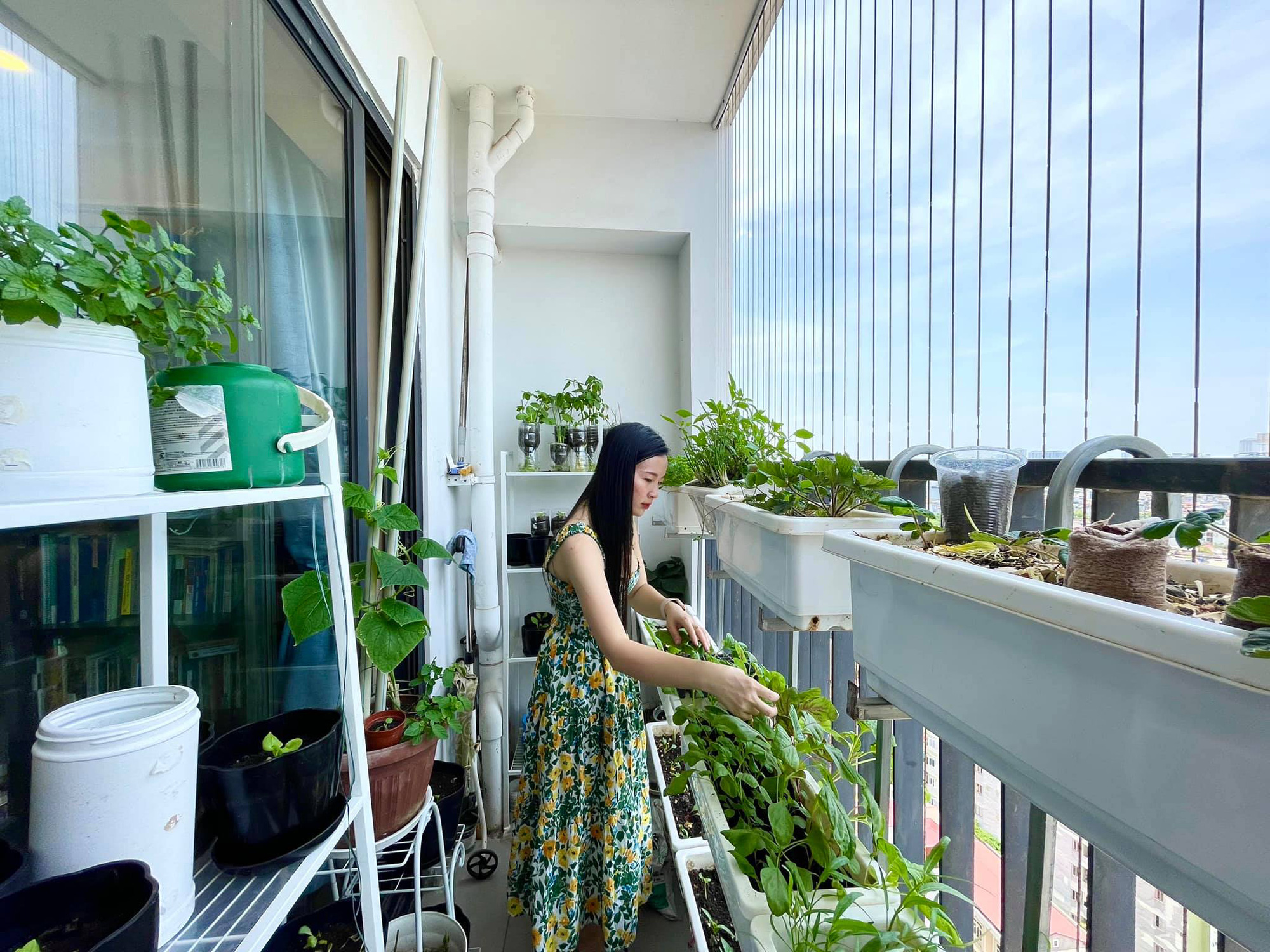 Ban công 7m2 vẫn đủ rau ăn cho cả nhà trong mùa dịch giãn cách ở Hà Nội - Ảnh 6.
