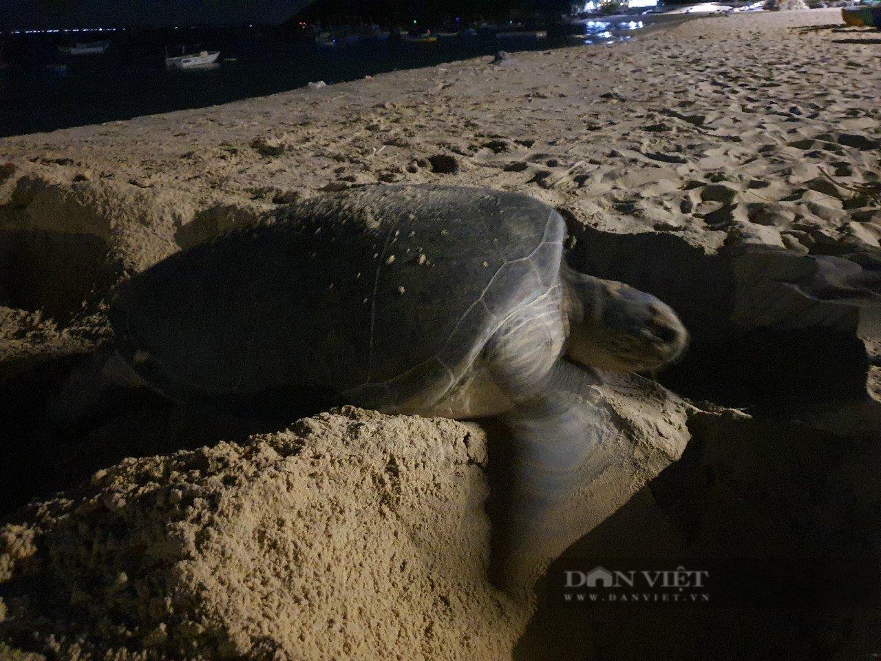 Bình Định: Rùa biển quý hiếm bất ngờ vào bờ, đẻ được 99 quả trứng - Ảnh 3.