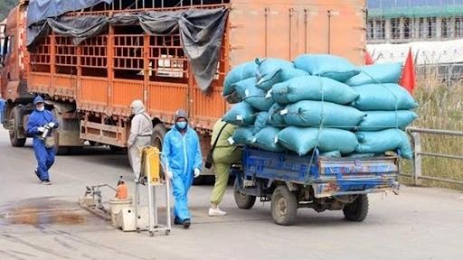 Duy trì sản xuất, lưu thông nông sản, đảm bảo nguồn cung thực phẩm trước bối cảnh dịch bệnh - Ảnh 3.