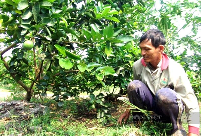 Dịch bùng phát, nông dân làm nông sản theo cách này rộng đường lên kệ siêu thị - Ảnh 3.