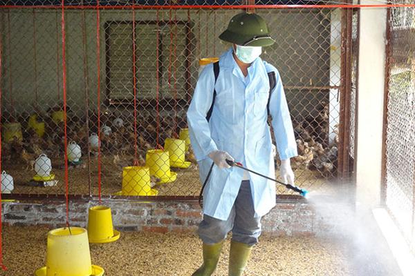 Duy trì sản xuất, lưu thông nông sản, đảm bảo nguồn cung thực phẩm trước bối cảnh dịch bệnh - Ảnh 8.