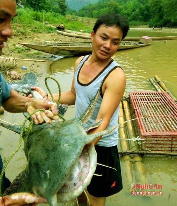 5 loài cá đặc sản nào quý hiếm nhất ở miền Tây tỉnh Nghệ An, có loài cá tên là tịt mũi không? - Ảnh 5.