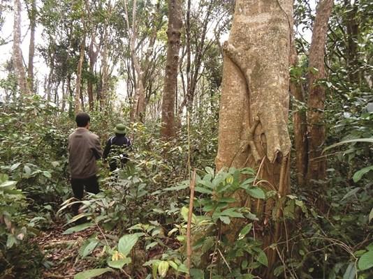 Quảng Bình: Giữ chốn rừng thiêng, thấy lạ vì nghe tiếng trẻ thơ ríu rít gọi nhau, ồn ào như cạnh đường quốc lộ - Ảnh 1.
