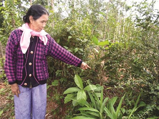 Quảng Bình: Giữ chốn rừng thiêng, thấy lạ vì nghe tiếng trẻ thơ ríu rít gọi nhau, ồn ào như cạnh đường quốc lộ - Ảnh 2.