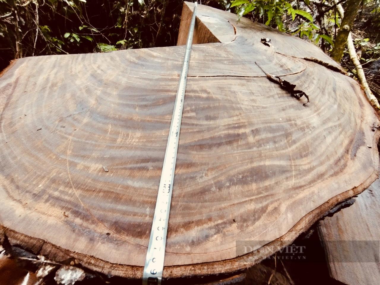 """Vụ phá rừng nghiến """"khủng"""" nhất Việt Nam: Hà Giang thừa nhận hơn 710m3 gỗ nghiến bị tàn phá trong rừng đặc dụng Du Già - Ảnh 4."""