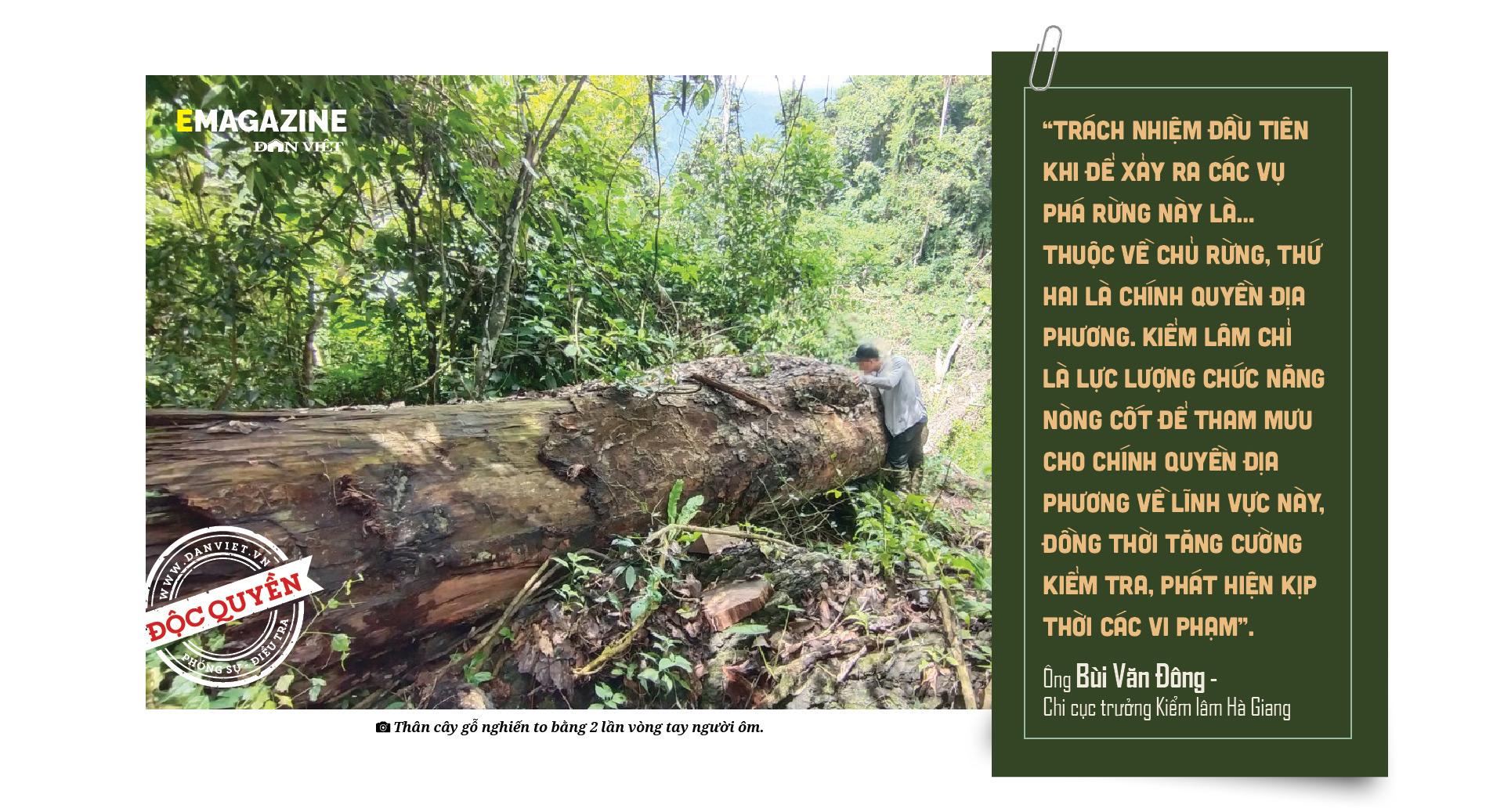 """Phía sau vụ """"thảm sát"""" rừng nghiến cổ thụ - Bài 4: Trách nhiệm của những công bộc giữ """"báu vật trên miền đá"""" - Ảnh 9."""