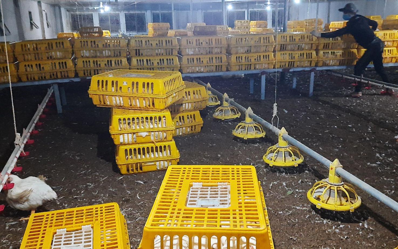 Giá gia cầm hôm nay 30/7: Giá gà công nghiệp miền Bắc lại rớt thảm, vịt thịt bán chậm