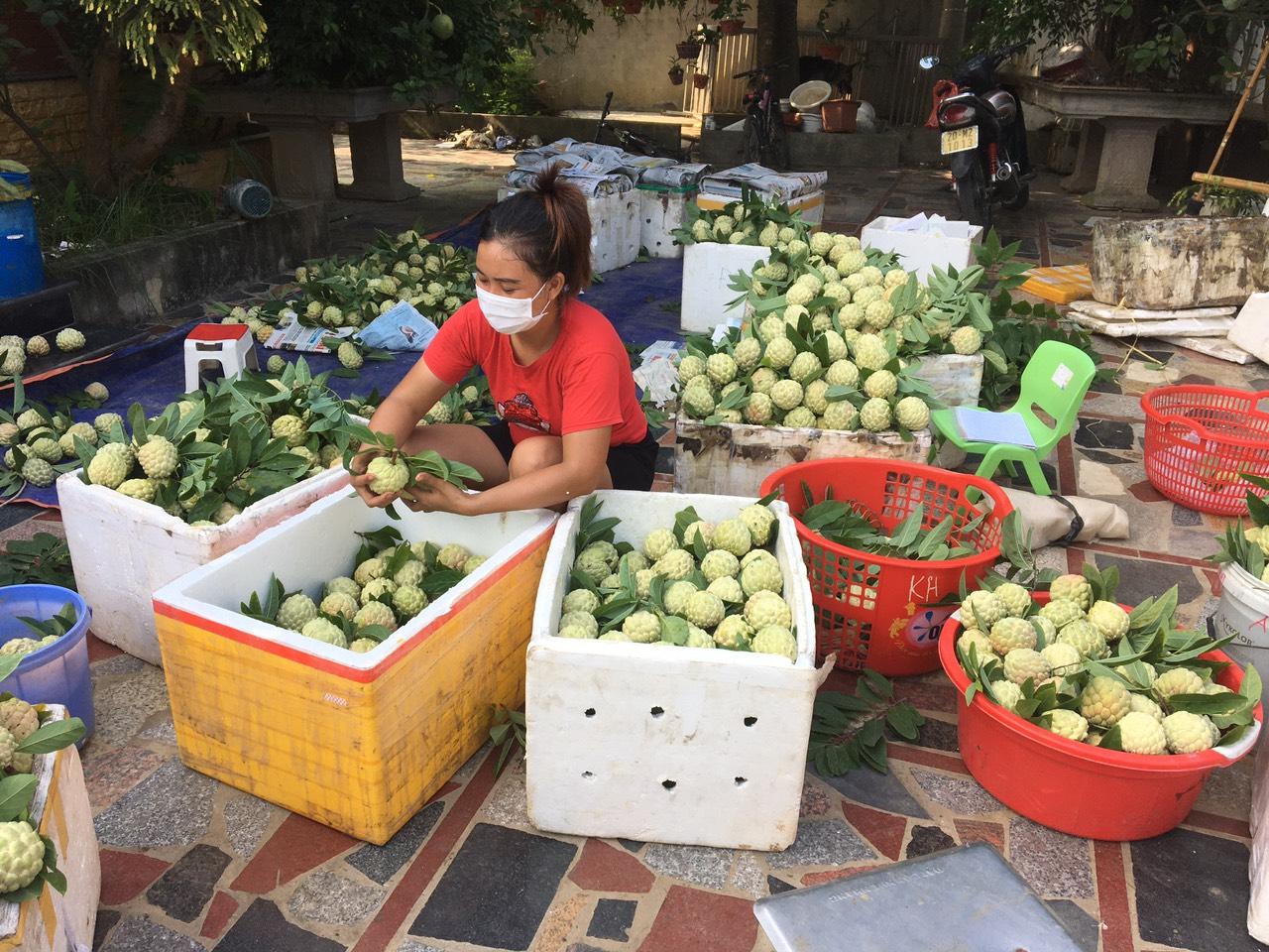 Thái Nguyên hỗ trợ nông dân kết nối tiêu thụ na giữa mùa dịch - Ảnh 3.