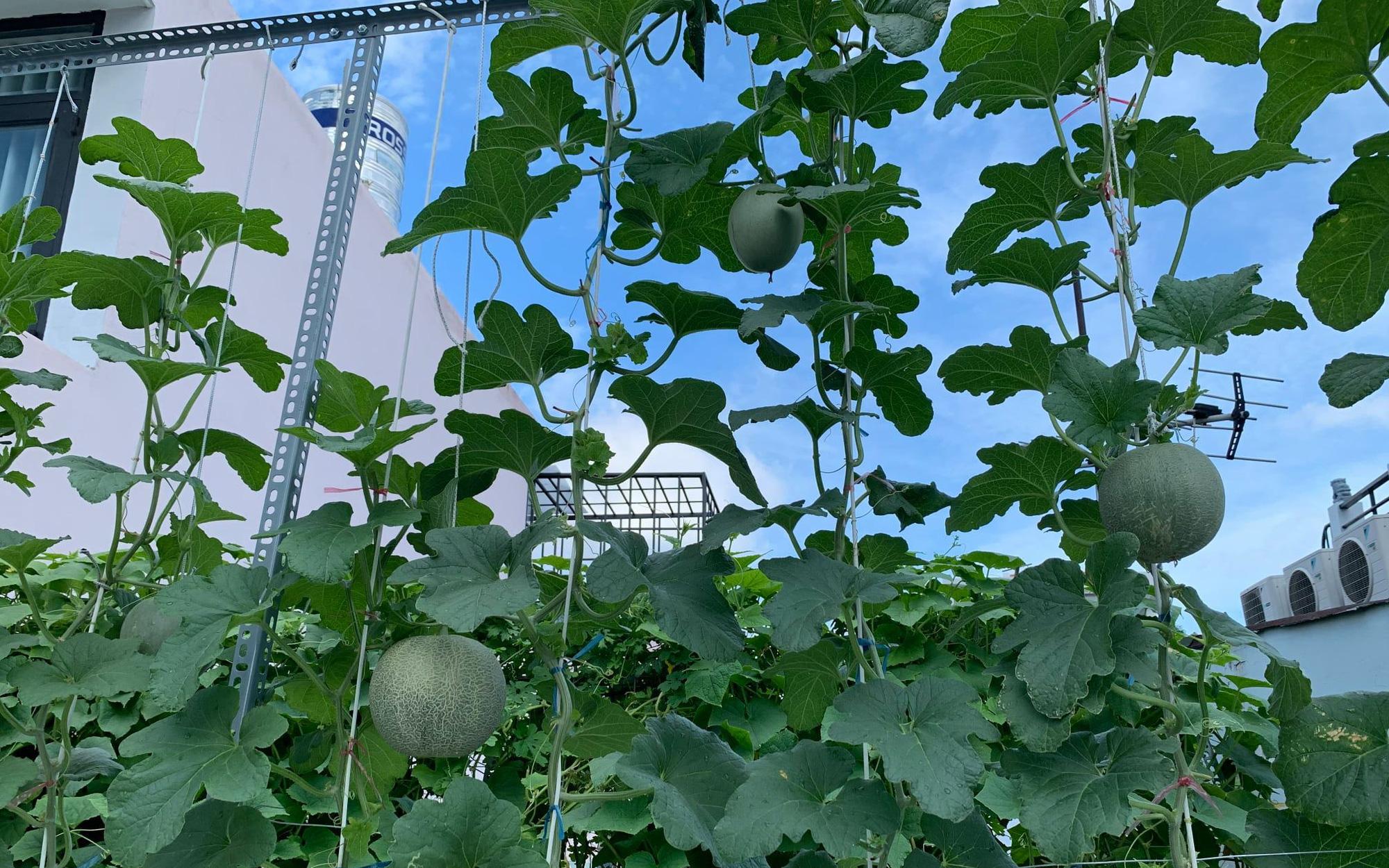 Clip: Kinh nghiệm biến rác thải nhà bếp thành phân bón cho vườn rau trĩu trịt, xanh tốt