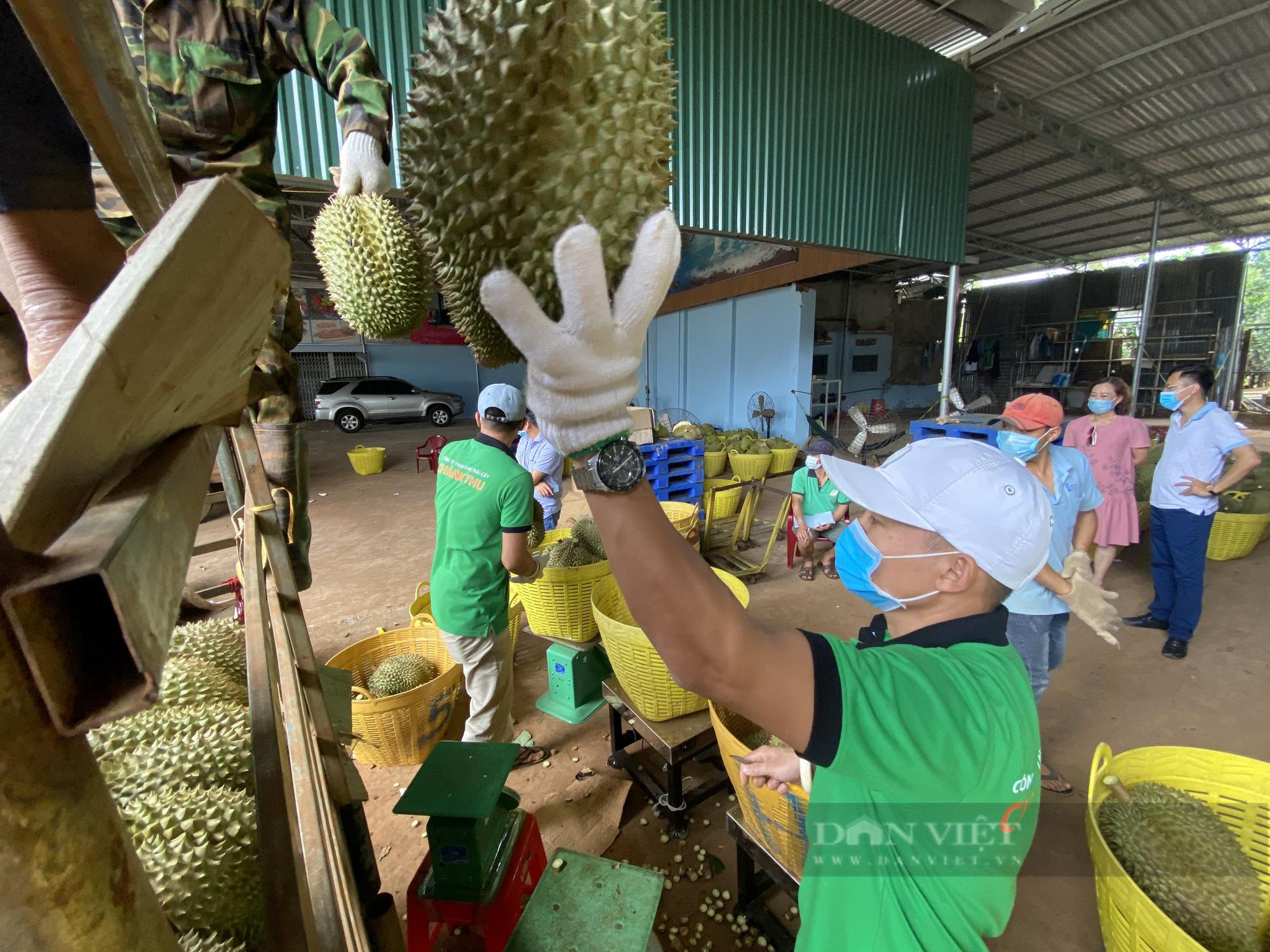 Đắk Lắk: Thủ phủ sầu riêng tìm lối ra trước những khó khăn mùa dịch Covid-19  - Ảnh 2.