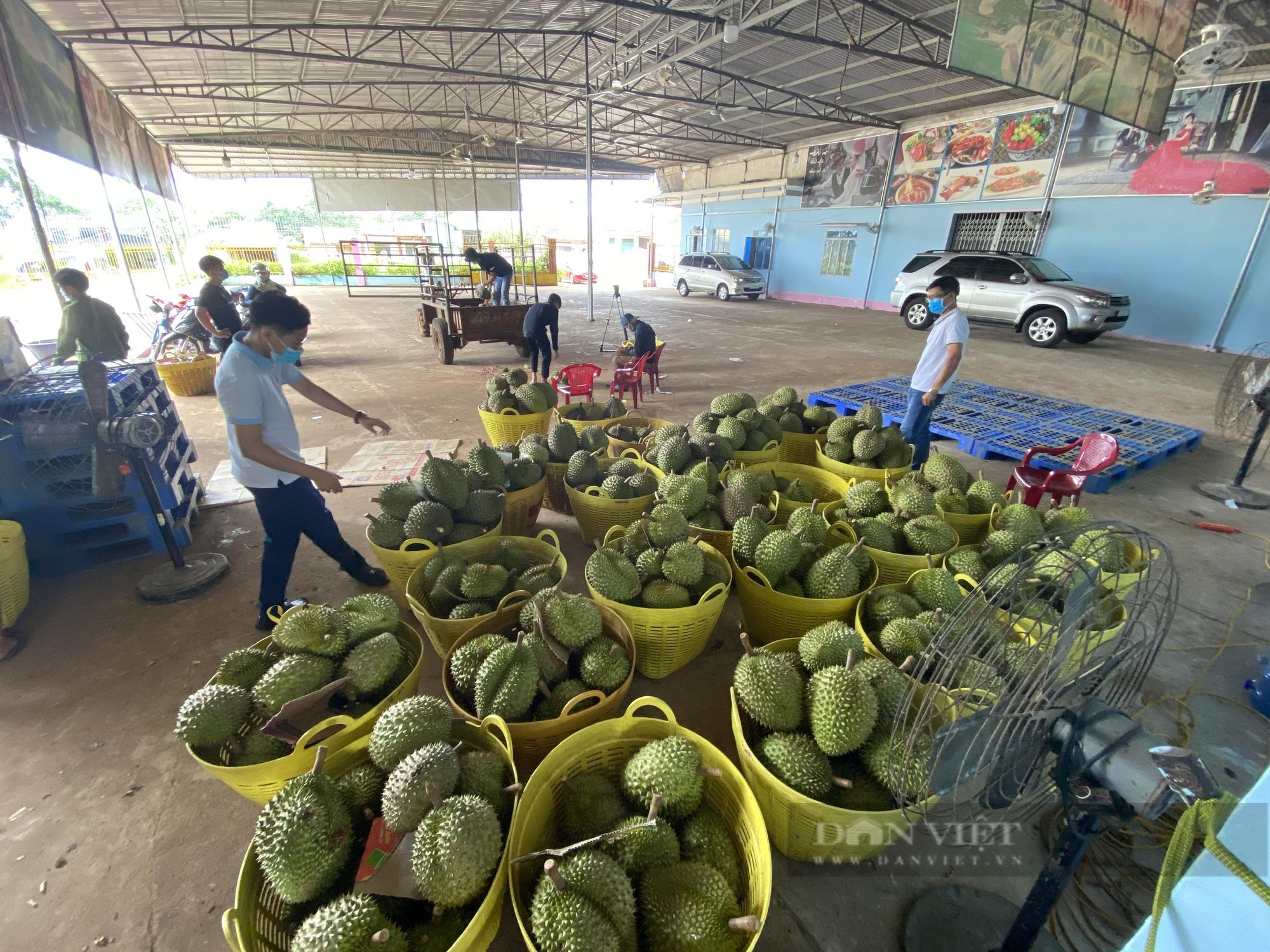 Đắk Lắk: Thủ phủ sầu riêng tìm lối ra trước những khó khăn mùa dịch Covid-19  - Ảnh 3.