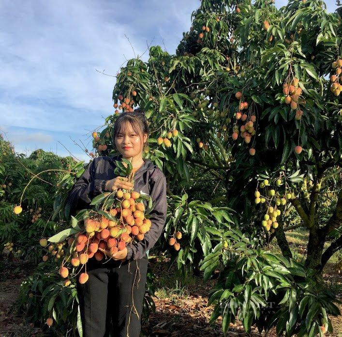 """Đắk Lắk: Hội nông dân của một huyện vừa nhận được hàng loạt """"cơn mưa"""" thành tích - Ảnh 2."""