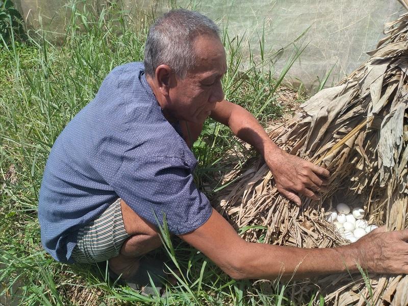 Nuôi chim trời lạ đời, ông nông dân tỉnh Cà Mau cứ bán 1 con be bé cũng có giá cả trăm ngàn đồng - Ảnh 1.