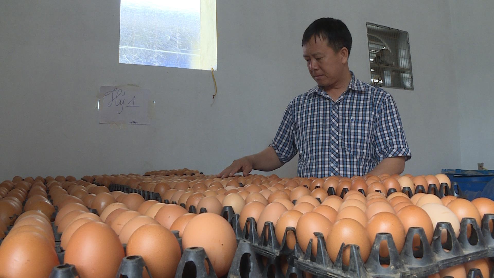 10 triệu dân Hà Nội cần bao nhiêu quả trứng mỗi tháng?  - Ảnh 1.