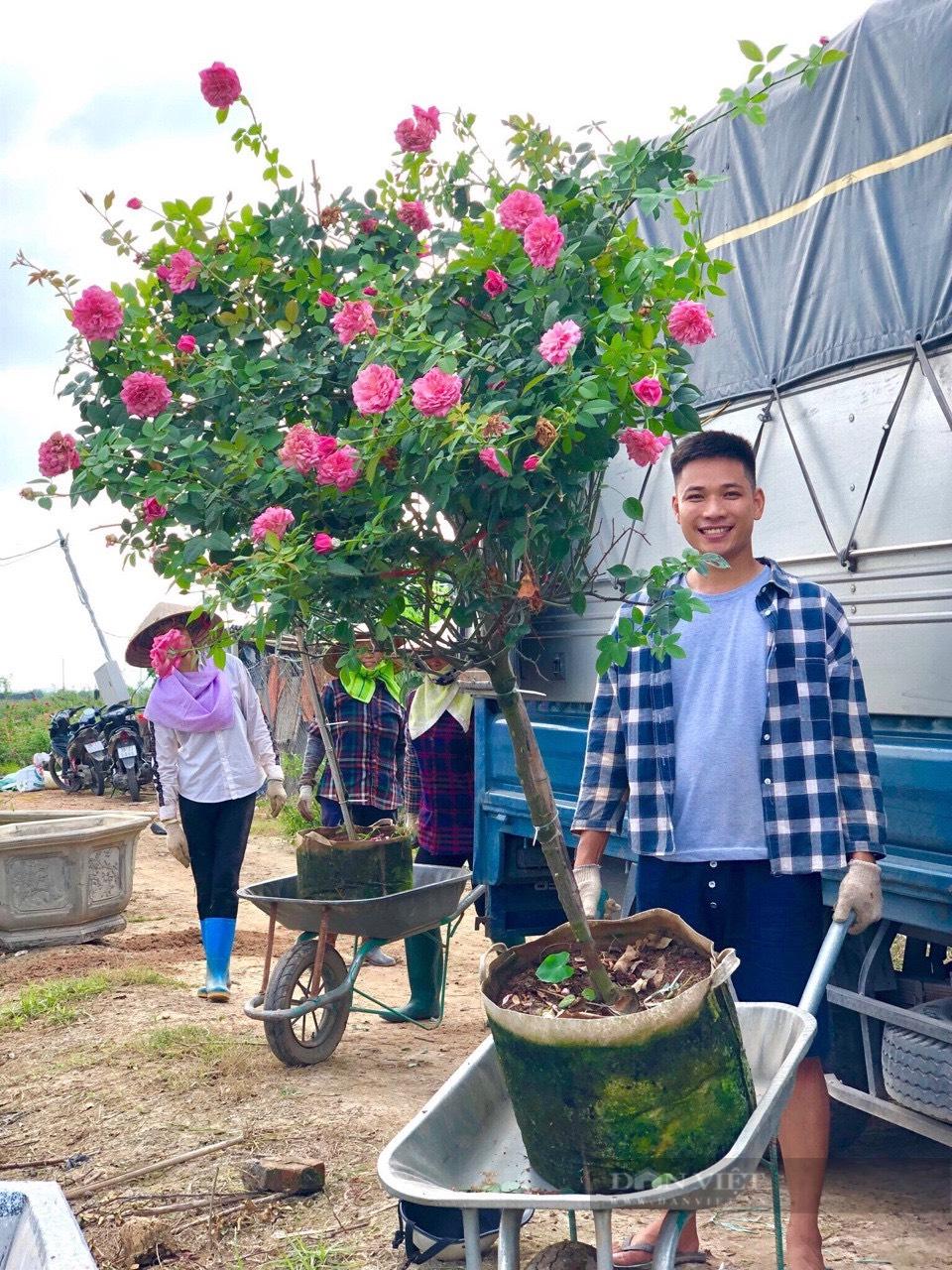 Thanh niên Mê Linh và ước mơ biến Hà Nội thành rừng hồng rực rỡ - Ảnh 4.
