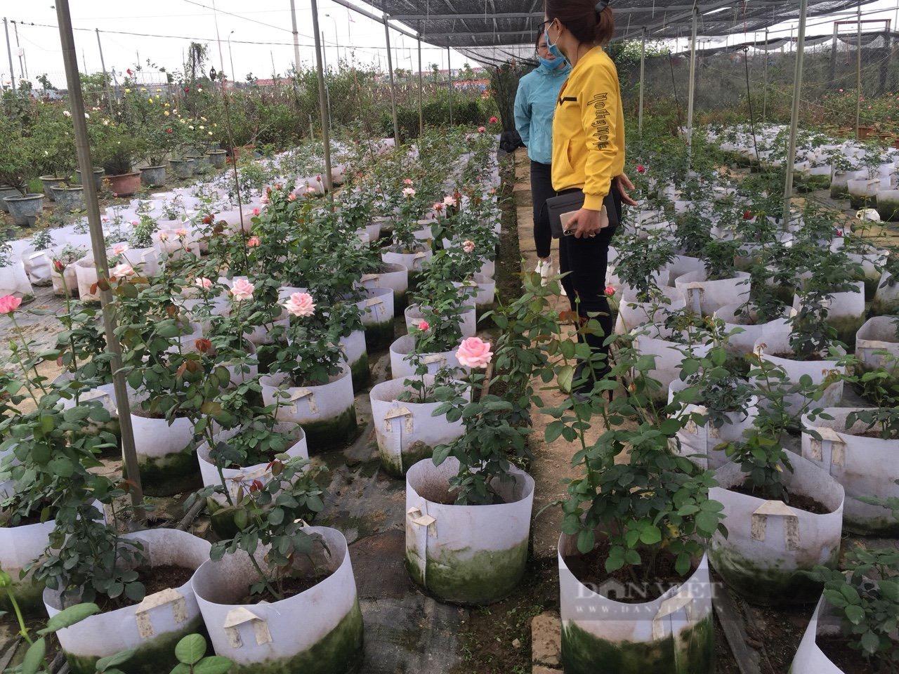 Thanh niên Mê Linh và ước mơ biến Hà Nội thành rừng hồng rực rỡ - Ảnh 9.