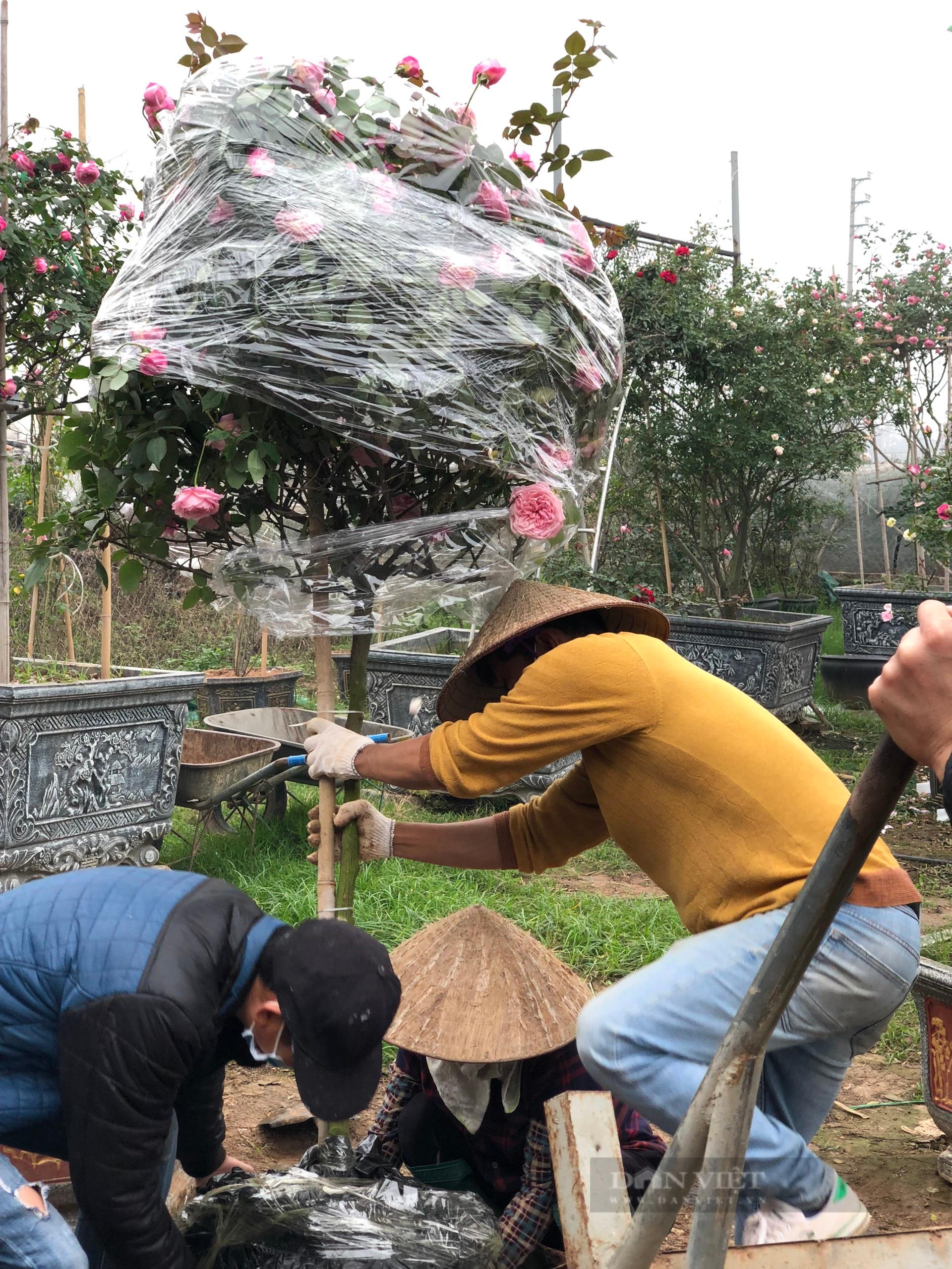 Thanh niên Mê Linh và ước mơ biến Hà Nội thành rừng hồng rực rỡ - Ảnh 10.