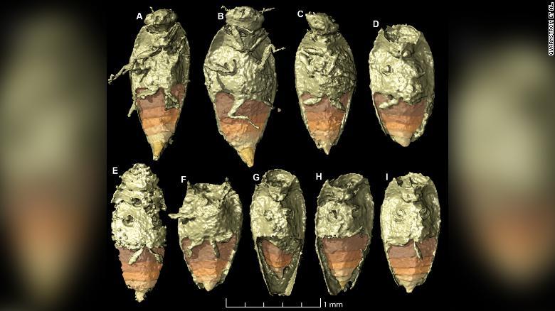 """Bất ngờ phát hiện """"kho báu"""" 230 triệu năm nằm trong phân khủng long hóa thạch - Ảnh 1."""