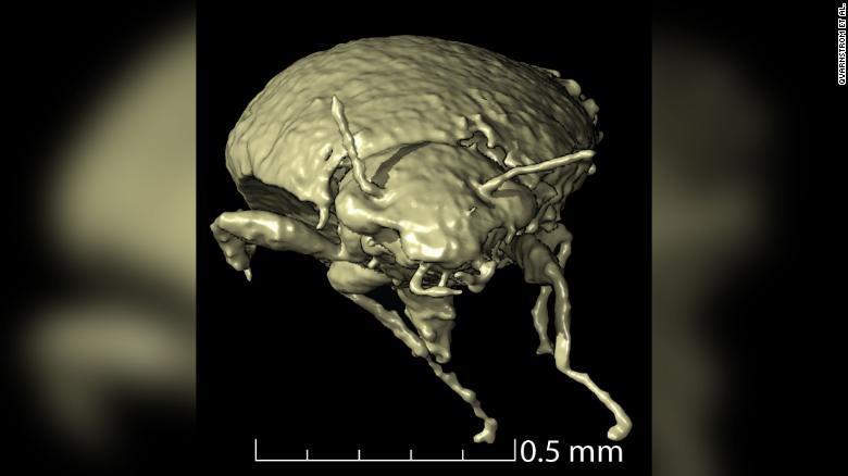 """Bất ngờ phát hiện """"kho báu"""" 230 triệu năm nằm trong phân khủng long hóa thạch - Ảnh 2."""
