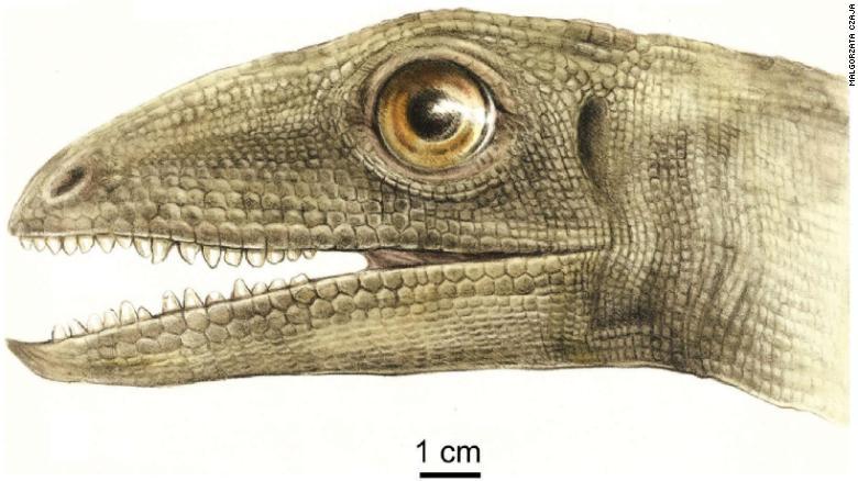 """Bất ngờ phát hiện """"kho báu"""" 230 triệu năm nằm trong phân khủng long hóa thạch - Ảnh 3."""