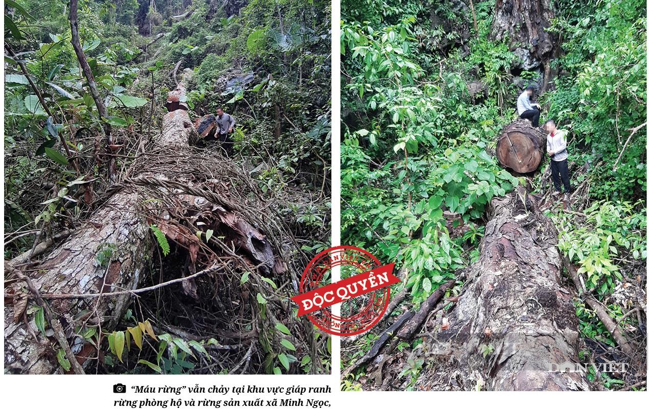 Hà Giang: Bắt giữ 278 khúc gỗ nghiến dạng thớt sau loạt bài điều tra của Dân Việt - Ảnh 4.