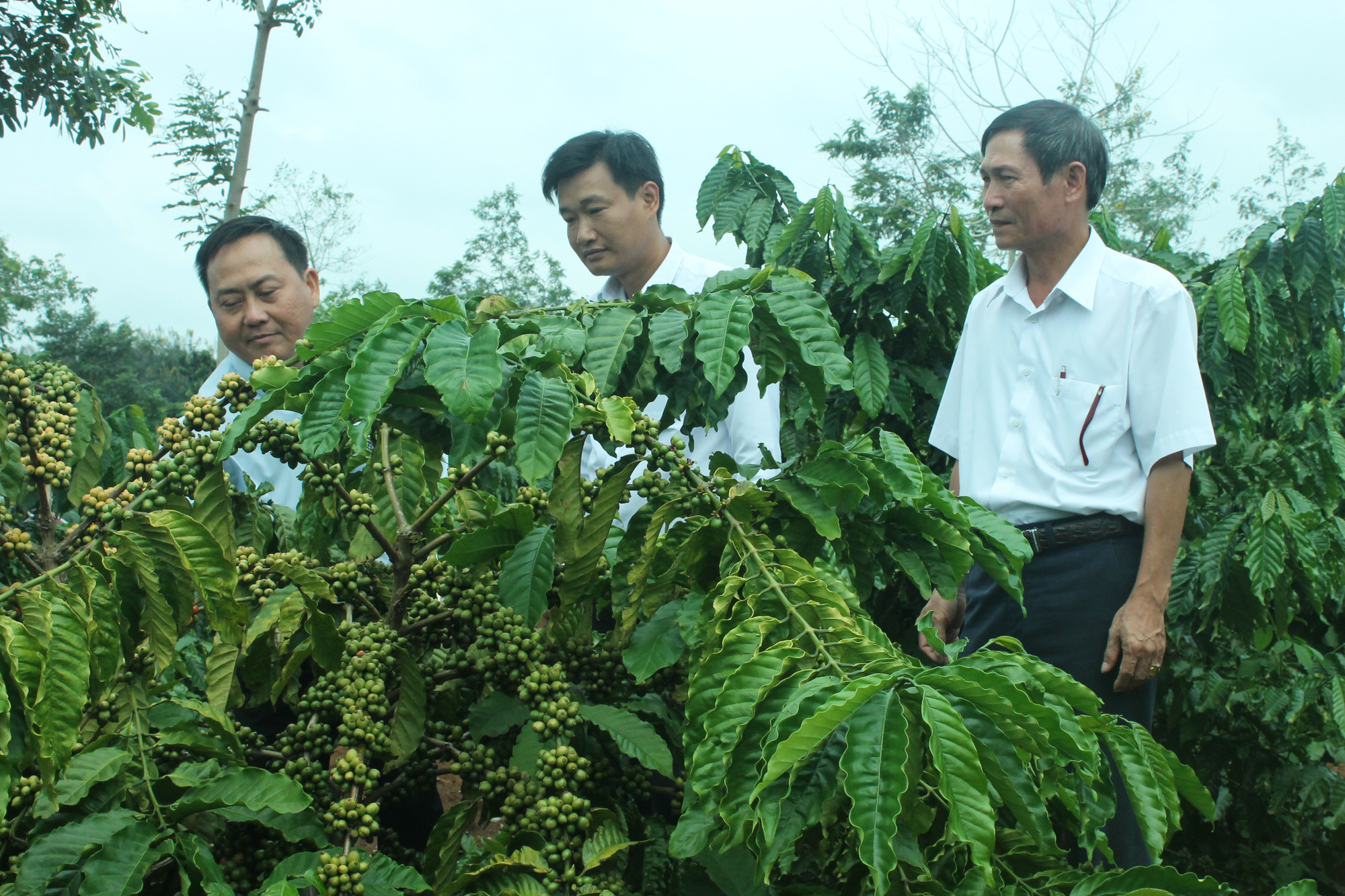 Agribank tỉnh Đắk Lắk: Hơn 9.000 tỷ đồng dư nợ cho vay nông nghiệp, nông thôn - Ảnh 1.