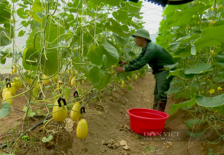 Anh nông dân người Tày Bắc Kạn trồng thứ quả nhìn thôi đã muốn hái - Ảnh 2.