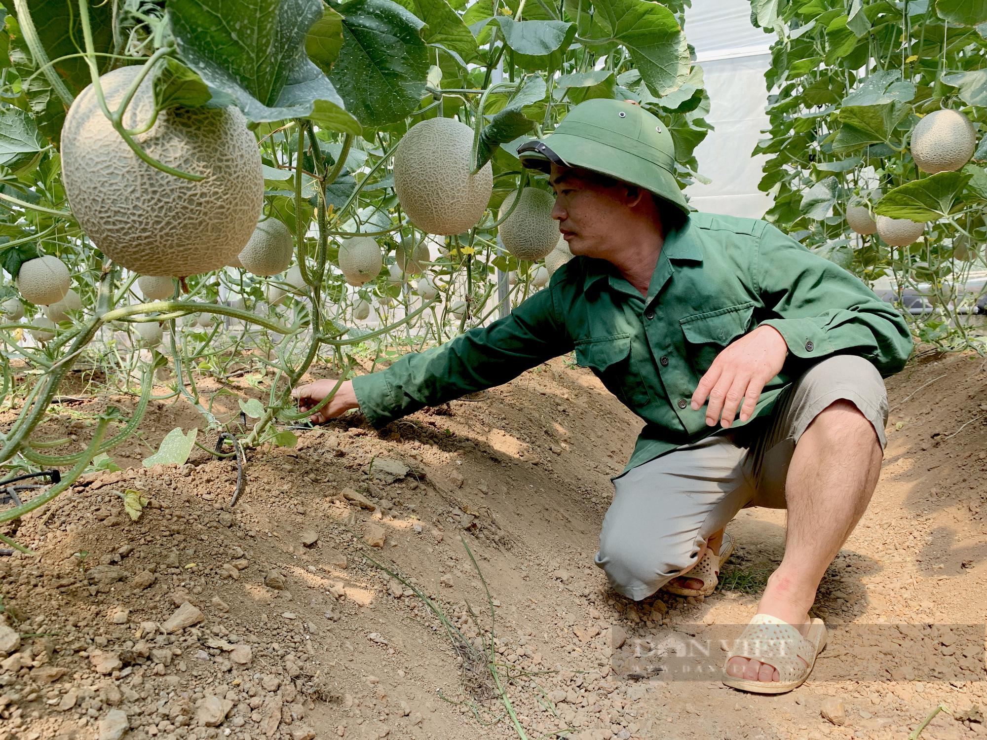 Anh nông dân người Tày Bắc Kạn trồng thứ quả nhìn thôi đã muốn hái - Ảnh 5.