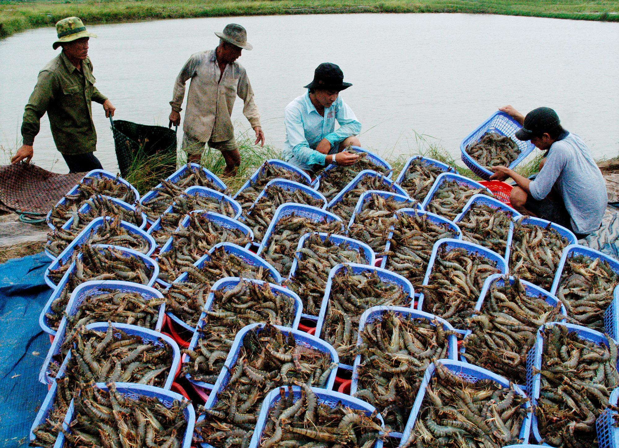 Mỹ, Nhật Bản mua lượng khổng lồ, loại nông sản này của Việt Nam thu 4,12 tỷ USD, doanh nghiệp vẫn than khó - Ảnh 1.