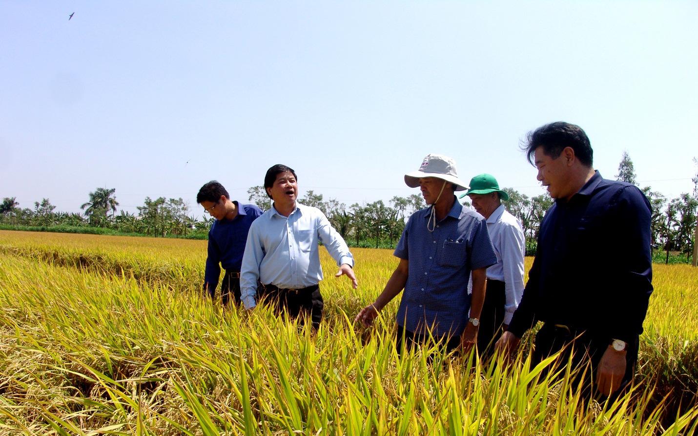 Long An: Nông dân giàu lên nhờ ứng dụng công nghệ cao trong sản xuất nông nghiệp