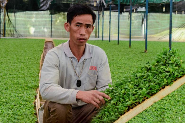 Nông dân Việt Nam đầu tiên ươm cây giống hóa cúc xuất khẩu sang Hàn Quốc là ở tỉnh nào? - Ảnh 1.