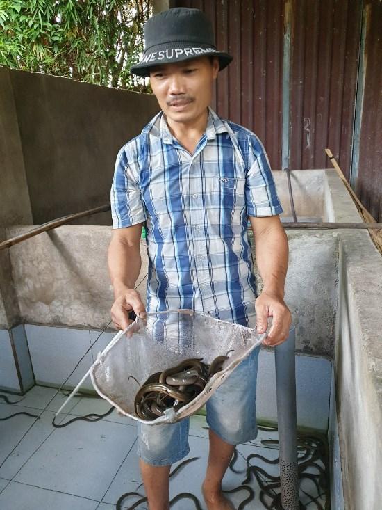 Phú Yên: Nuôi lươn không bùn dày đặc trong bể lát gạch men, anh trai làng giàu hẳn lên - Ảnh 3.